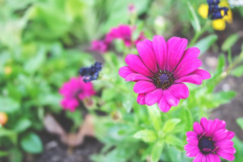 cliche-mignon-fleurs-photo-libre-droit-gratuit