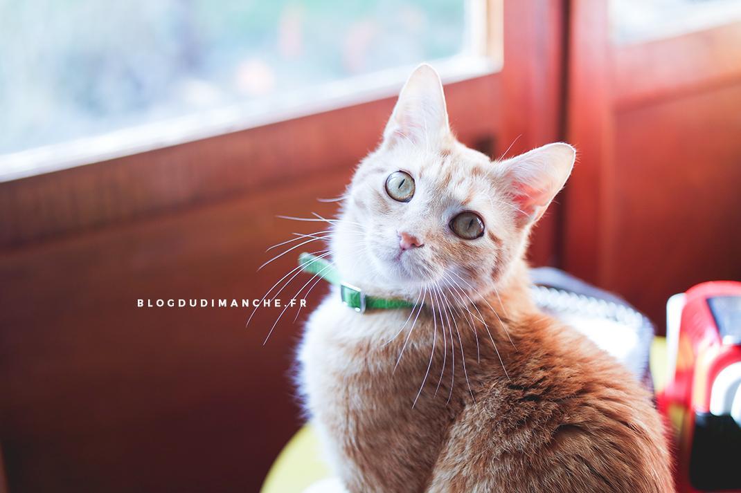 Ce que j 39 ai fait quand mon chat a disparu blog du dimanche - Mon chat me colle plus que d habitude ...